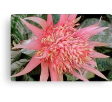Pink Prongs ^ Canvas Print