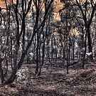Burnt forrest by BigAndRed