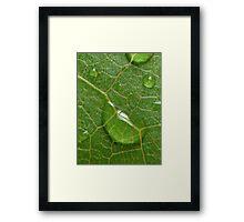 Droplet on leaf Framed Print