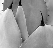 Desert Forms by dsa157