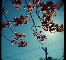 spring cherry tree ttv by Adam Graham