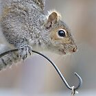 Squirrel Close-up by okcandids