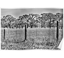 Texas Countryside Poster