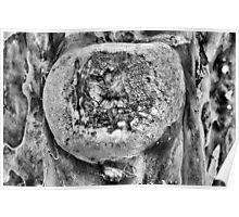 Tree Art B&W Poster