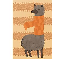 Llama In A Scarf Keeping Warm Photographic Print