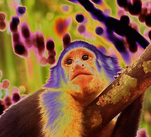 Solarized White-faced Capuchin Monkey by Laurel Talabere