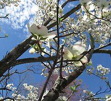 Sakura Onwards by KensLensDesigns
