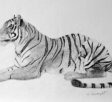 Tiger by sally seabright