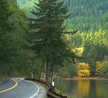 Washington State by Darlene Virgin
