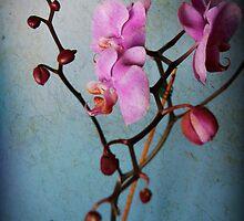rustic love by Lisa Utronki