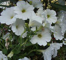 Feel Good Flowers by Jerry Stewart