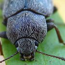 This is one of Those beetles you Here Snapping by Heavenandus777