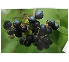 Blue Berry Poster