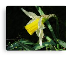 One In The Sunshine Canvas Print