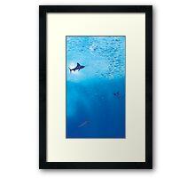 Underwater Ocean Scene Framed Print