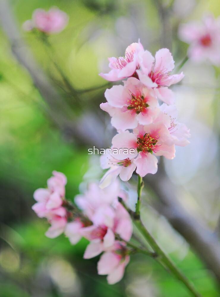 Peach Blossoms by shanarae