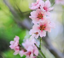 Peach Blossoms by shanarae