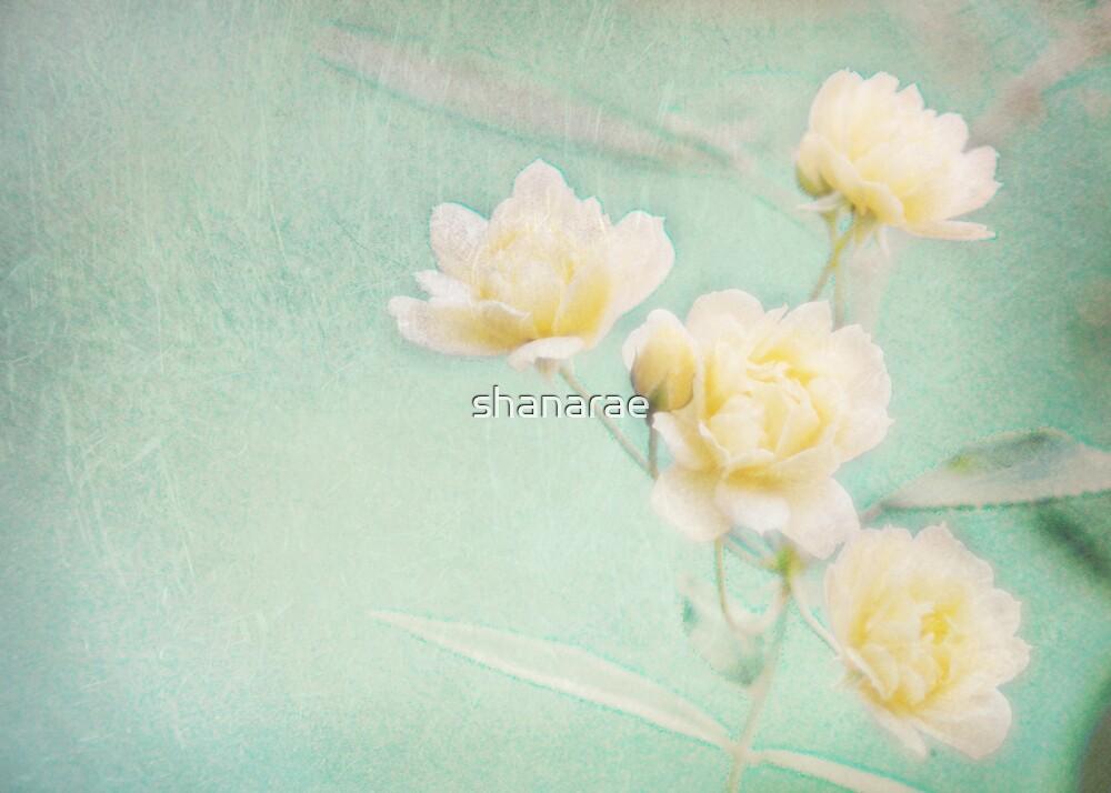 Popcorn Roses II by shanarae