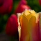 Pretty Colors by Sharon Morris