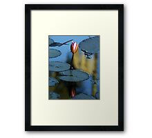 Pink Diva - waterlilly Framed Print