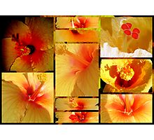 Hibiscus Lovers .. Photographic Print