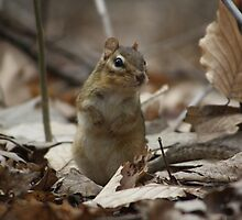 Chipmunks by Alyce Taylor