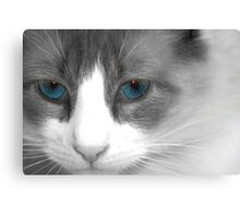 just call me kitty Canvas Print