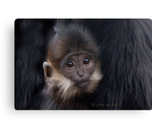 ....monkey business... Canvas Print
