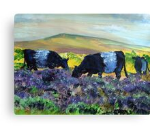 Belted Galloway Cows on Dartmoor Canvas Print