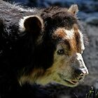 Andean Bear by venny