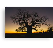 Boab at Sunset Canvas Print