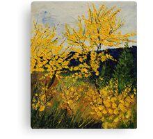 brooms shrubs Canvas Print