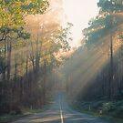 Morning Sunrays, Yarra Ranges, Victoria. by Ern Mainka