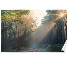 Morning Sunrays, Yarra Ranges, Victoria. Poster