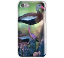 Black-Bellied Whistling-Duck iPhone Case/Skin