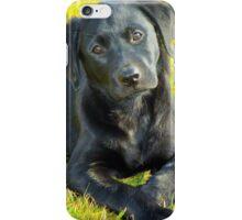 India Puppy 2 iPhone Case/Skin