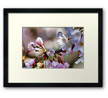 Cherry Nursery Framed Print
