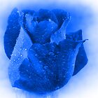 Beautiful Blue by Sandy Keeton