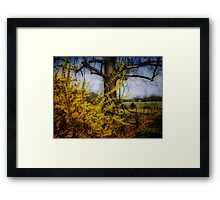 color spring yellow... Framed Print