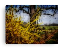 color spring yellow... Canvas Print