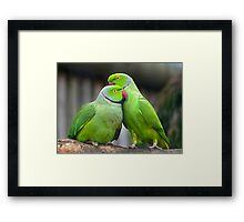Psst... don't look now... its that snapper! Framed Print