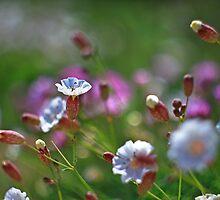 Clifftop Flowers, Limestone Coastal Plateau by Mark Haynes Photography