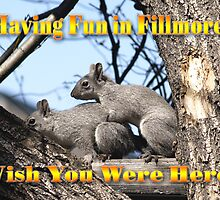 Fillmore squirrel by Steve Hunter