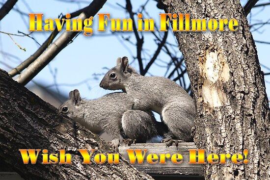 Fillmore squirrel by Steve Hunter
