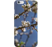 Plum blossom in the sky spring confirmation iPhone Case/Skin