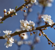 Plum blossom in the sky spring confirmation Sticker