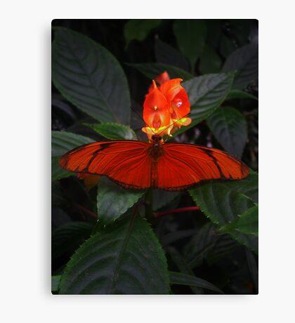 Like a Firefly Canvas Print