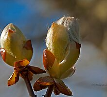 Spring Buds~ by WJPhotography