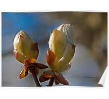 Spring Buds~ Poster