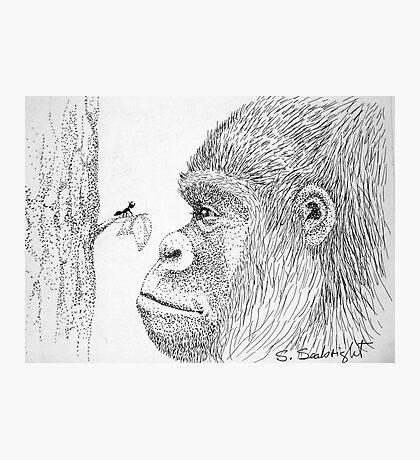 Gorilla and Ant Photographic Print
